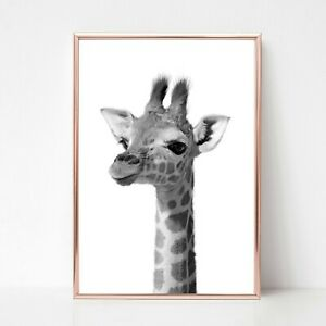 baby giraffe Print picture UNFRAMED print nursery wall art a4 black white animal