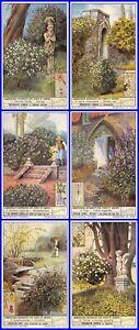 Paket 6 Glanzbilder Liebig Serie Sträuchern Platten Des Parkanlagen Und Gärten