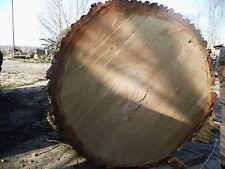 Baumscheibe, Holzscheibe, 120 cm, Eiche