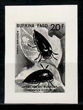 Photo Essay, Burkina Faso Sc776 Insect, Sternocera interrupta.