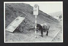 TANGER (MAROC) ANE à l'ARRET de BUS en 1978