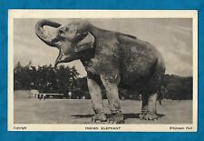 1930s WHIPSNADE ZOO PC INDIAN ELEPHANT