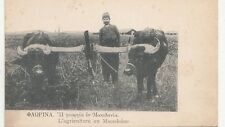 B79242 l agrieulture field work bull types  macedonia front/back image