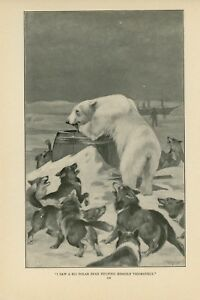 1900 Polar Bear Problems Northwest Territories Canada Cape Bathurst Hunting