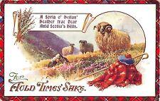 POSTCARD   GREETINGS  For Auld  Times  saks...   Sheep