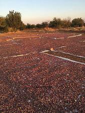 50 Seeds Turkish Antep Pistachios GENUINE PISTACIA VERA Tree Natural EDIBLE Seed