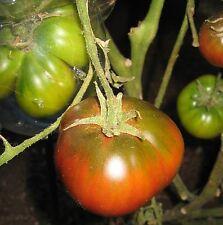 Black Sea Man tomato 25+ seeds, open-pollinated, organic, heirloom, non-Gmo