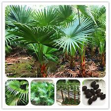 Ornamental Livistona Chinensis Seeds Plants Bonsai Diy 'little Forest' 5pcs