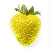 Yellow Strawberry Fruit Seeds Patio Strawberry Plant Fruit Seeds Yellow Wonder