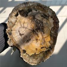 Petrified wood slab. MASSIVE PIECE, perfectly polished! 2516g#dmhs