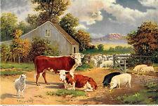 R. Atkinson Fox, Cows, Sheep, Pigs, Farm, Mt's, Rare Salesman Sample Print 1910