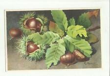 137909 stupenda cartolina artistica frutta di s. bonelli