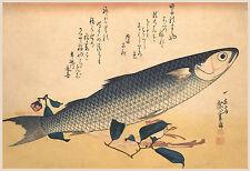 Japanese Art: Hiroshige Fish: Mullet (Bora Zu)- Fine Art Print