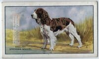 English Springer Spaniel Dog 75+ Y/O Ad Trade Card