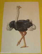 Alphabetic Flash Card Letter O Is For Ostrich Art Work By Platt & Munk Great Pic