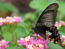 Singapore wildlife butterfly insect digital photo image for personal uses