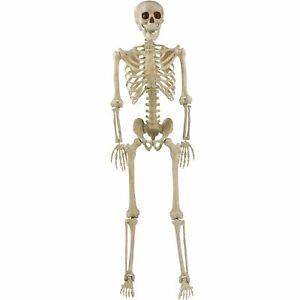 Skeleton Halloween Decor, 5' Tall Life-Size Poseable Skeleton