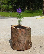 """WOOD PLANTER FROM OUR WOODS! LOG STYLE APROX 7"""" X 8"""" OTHER SIZES ON REQUEST"""