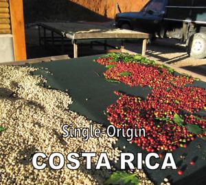 2 lbs. Costa Rica SHB Tarrazu La Pastora Light Fresh Roast 100% Arabica Coffee B