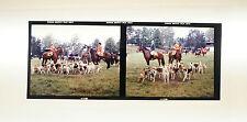 """Dias Dia Mittelformat 7x6 cm - 2 x """"Hunde und Pferde"""" - B2441"""