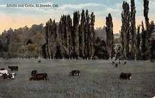 El Dorado California Alfalfa And Cattle Cows Antique Postcard K60317