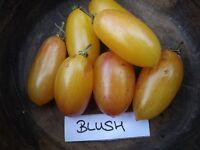 Tomate Blush - 10+ Samen - BESONDERS und FEIN!