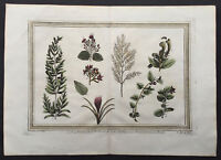 1755 Prevost Antique Print Plants found by William Dampier in Australia in 1688