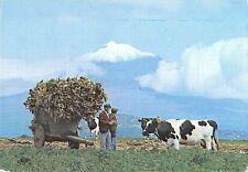 B96387 ilha do pico acores cena tipica types folklore cow   portugal