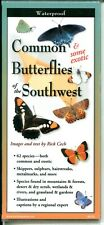 Common Butterflies of The Southwest Laminated Folding Pocket Guide (New)