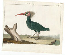1774 Friedrich Martini Natural History plate 107 Hand-coloured
