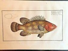1st EDITION BLOCH OBLONG FOLIO H/C RARE FISH - HOLOCENTRE OF SURINAM - #243