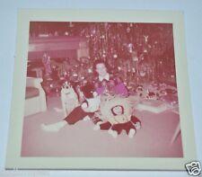 Vintage 1957 Photograph Dog Teddy Bear Funny Monkey Toy Christmas Tree Ornaments