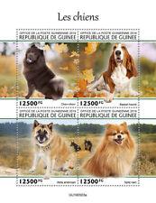 Guinea  2019 fauna Dogs S202001
