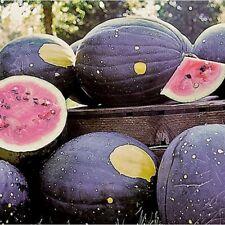 MOON & STARS WATERMELON -  RARE - 15 seeds (HERITAGE)