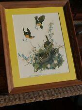 Vintage Oak Framed Bird Family Print NESTING YELLOW BREASTED CHAT Audubon type