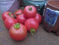 Dwarf Pink Opal Tomato (2019) : Dwarf Plant : Large Cherry : 20 Seeds