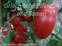 🔥 🍅 MAMA LEONE Tomate rot *** Flaschen-Tomaten ** 10 Samen