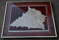 Vintage David Allgood Embossed Serigraph Conch Art Signed COA Framed 1982