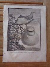 Mésange du Cap de Bonne-Espérance Gravure extraite du voyage aux Indes & Chine