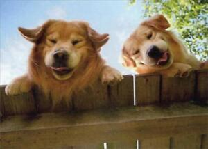 Get Well Greeting Card - Goldens Over Fence