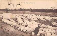 Biskra Algeria Grande Priere People Praying Religious Antique Postcard J41231
