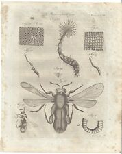 1798 Microscopic Objects INSECTS egg WASP Soldier Fly sphex magnified LARVA moth