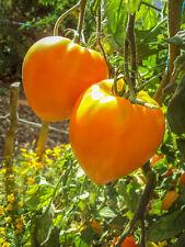 100 graines Tomates Coeur de Boeuf Orange de culture bio
