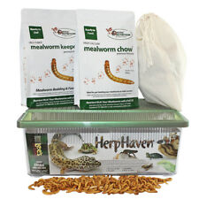 Mealworm Breeder Kit