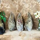 w159 Taxidermy Oddities Curiosity Pheasant 1 wing Feather smudge Decor crafts