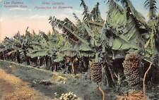 Spain Gran Canaria, Plantacion de Bananos