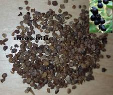 Goji negro - Lycium ruthenicum - 30 semillas seeds - fruta comestible