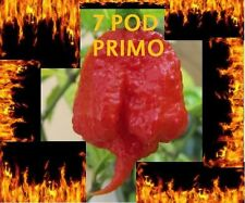 30 Seeds Trinidad 7 Pod (7 Pot) PRIMO Extremely Rare Hottest Pepper World Record