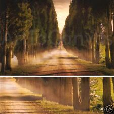 36x24 CYPRESS LINE ROAD II-JIMMY WILLIAMS TUSCAN CANVAS