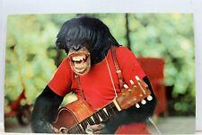 Florida FL Miami Monkey Jungle Chimp Show Postcard Old Vintage Card View Post PC